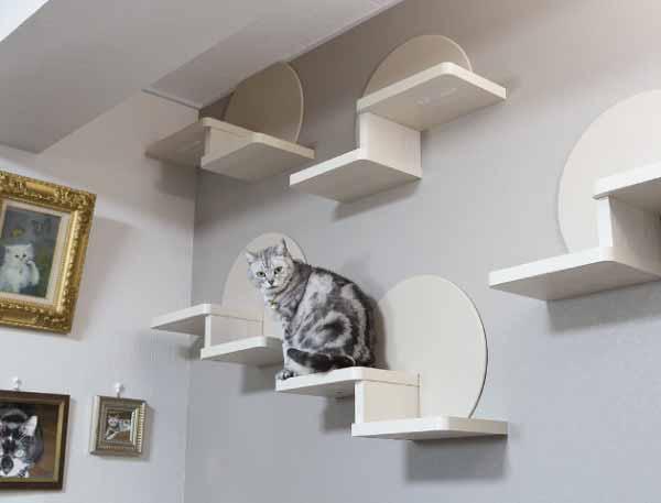 当社リフォーム実例:猫ちゃん達の健康維持
